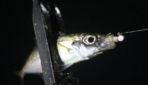 福岡県アジングポイントまとめ!おすすめのアジ釣りスポットを紹介