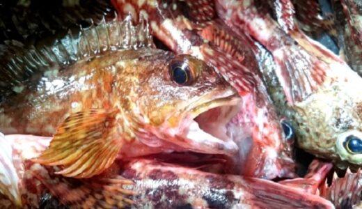 佐賀県穴釣りポイントまとめ!アラカブ釣るならここがおすすめ