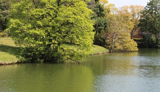佐賀野池バス釣り情報!おすすめの定番スポットを紹介