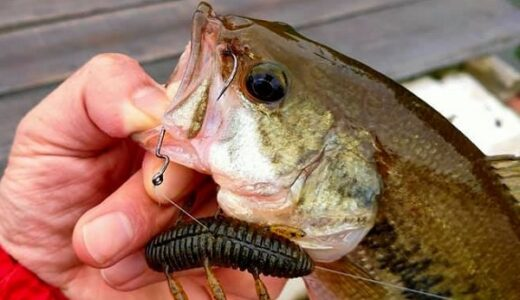虫系ワームおすすめ特集!浮くタイプと沈むタイプに分けて紹介