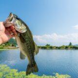 スモラバおすすめ紹介!バス釣りに欠かせない釣れるものを厳選