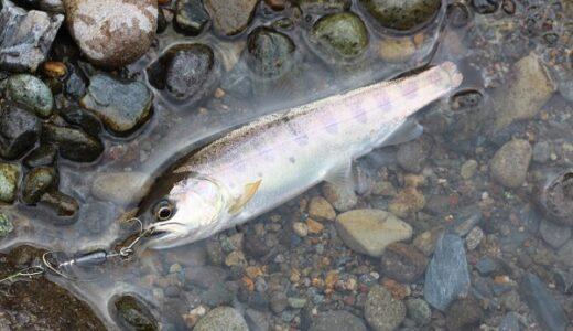 福岡ヤマメ渓流釣り調査!星野川のネイティブトラウトを探せ